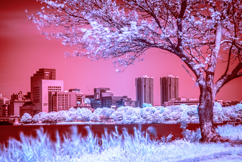 Boston Esplanade in Infrared (Channel Swapped, LR)